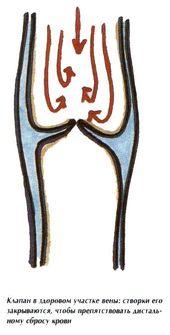 венозные клапаны в норме