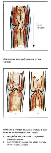 механизм действия створок венозного клапана