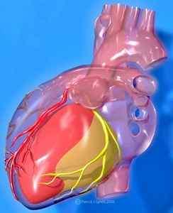 V Международная конференция Креативная кардиология Новые технологии в диагностике и лечении заболеваний сердца