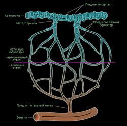 V Всероссийская конференция по клинической гемостазиологии и гемореологии в сердечно-сосудистой хирургии (с международным участием)