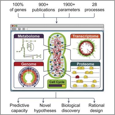Впервые создана компьютерная модель живой клетки