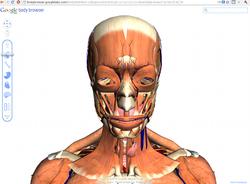Google Body Browser - тело человека в 3D